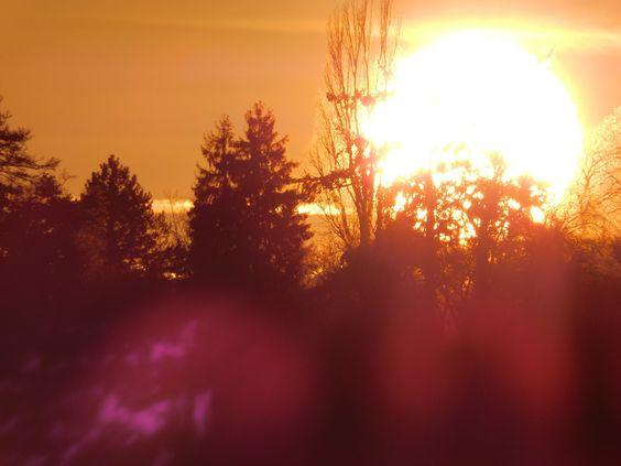 Bäume und die Sonnenscheibe ...