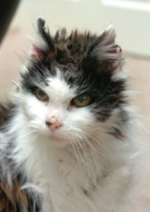 Cat is reunited with owners after being lost for 7 years- always microchip your pet, and keep information current!