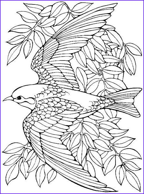 15 Cool Free Bird Coloring Pages Image Bird Coloring Pages Elephant Coloring Page Bird Drawings