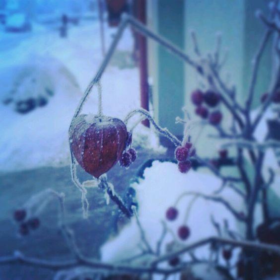 Winter - Gesteck - Haagebutten
