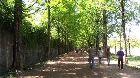 Sự thư thái cùng không khí trong lành bên hàng cây thẳng tắp