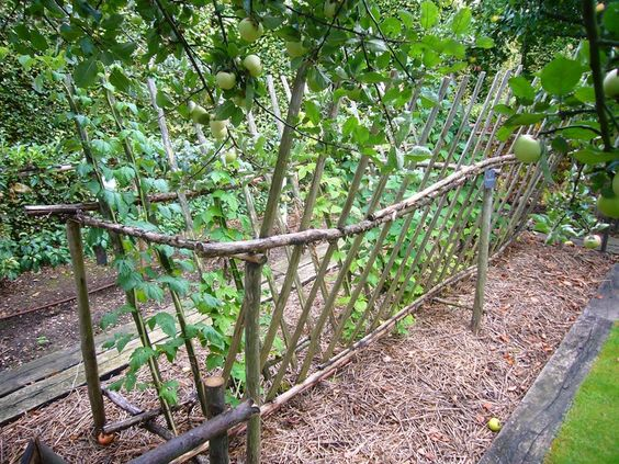 Ограда для кустов малины