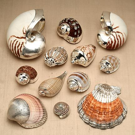 Silver coated seashells: