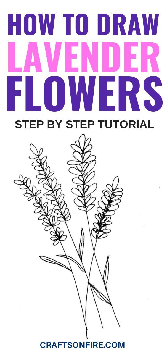 How To Draw Lavender Flowers Easy Step By Step Guide Flower Drawing Tutorials Lavender Lavender Flowers