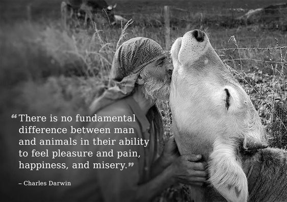 """There is no fundamental difference between man and animals in their ability to feel pleasure and pain, happiness and misery."" -Charles Darwin.  Compassion.:"