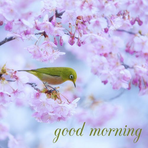 good morning card with bird on a beautiful tree: