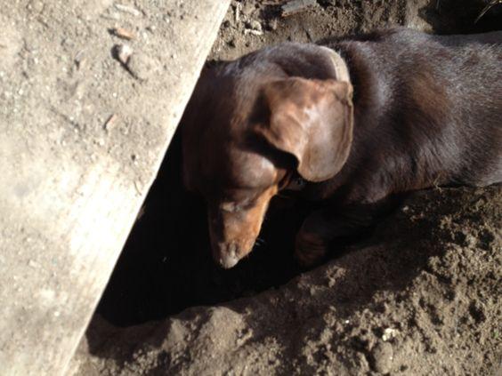 Franzi found a new gopher hole