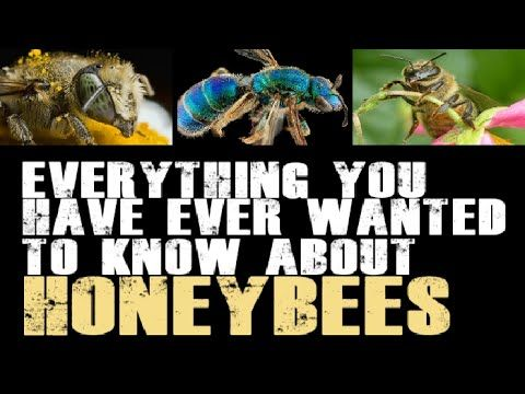 National Geographic Documentary PBS Natural Beekeeping Discovery Channel - YouTube