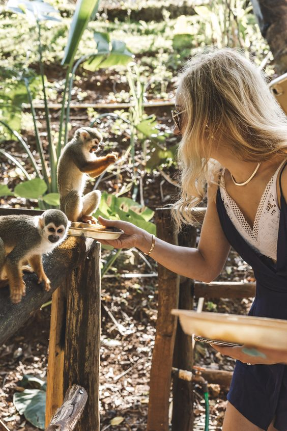Review of visit to Monkey Jungle in Sosua, Puerto Plata, Dominican Republic . #travel #republicadominicana #monkeys #wanderlust #nature Squirrel monkeys