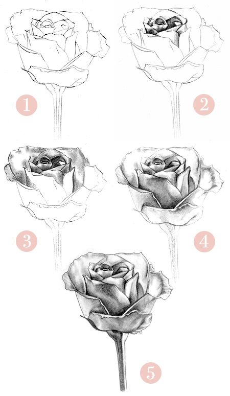 Rose Drawings In Pencil | how-to-draw-a-rose-1e - pencil draw - DragenBoy - Photos - Club Ados ...