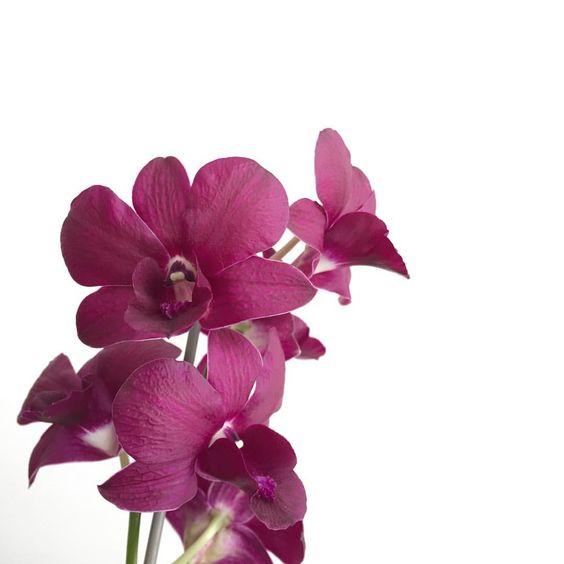 Tenham um lindo domingo, flores! 💐✨ www.flowersandnonsense.com.br #nofilter