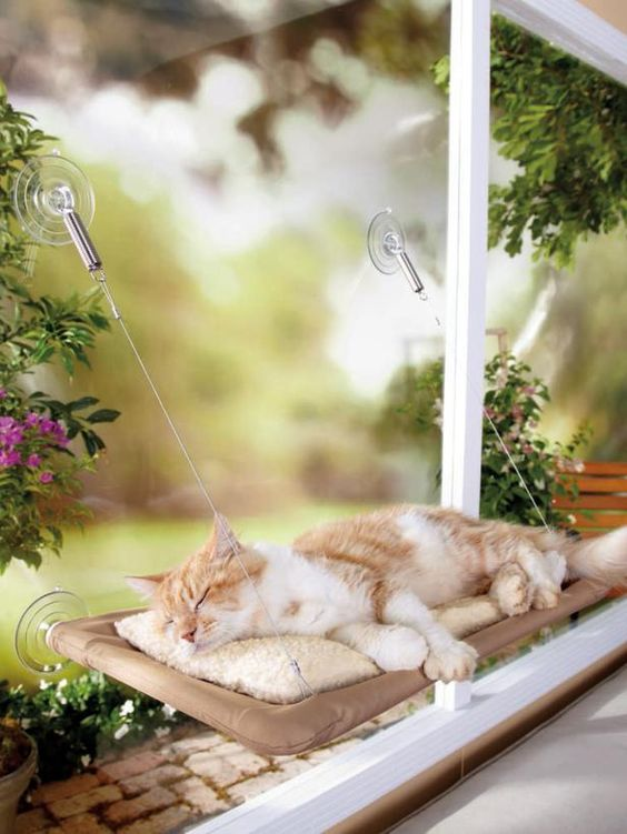 For Le Geeg! The Sunny Seat Cat Bed attaches to most windows and can hold up to 50 pounds with the support of industrial-strength suction cups.