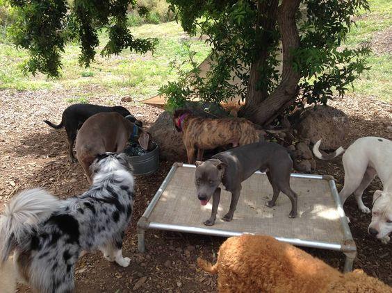 Pin By Terumi Laskowsky On Mana Animals Dogs Goats