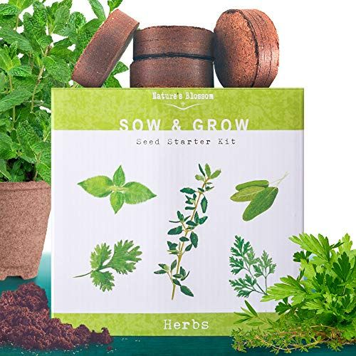 Nature S Blossom Herb Garden Seed Starter Kit Grow 4 Herbs From