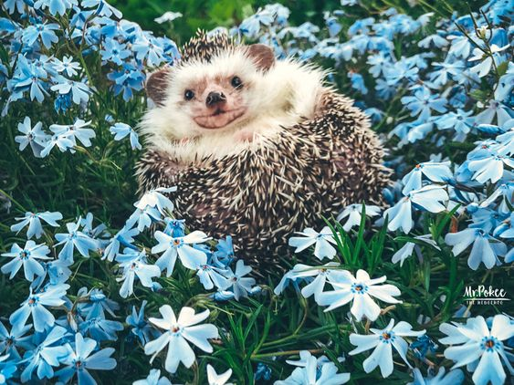 Mr.Pokee's Blog - Mr.Pokee the Hedgehog