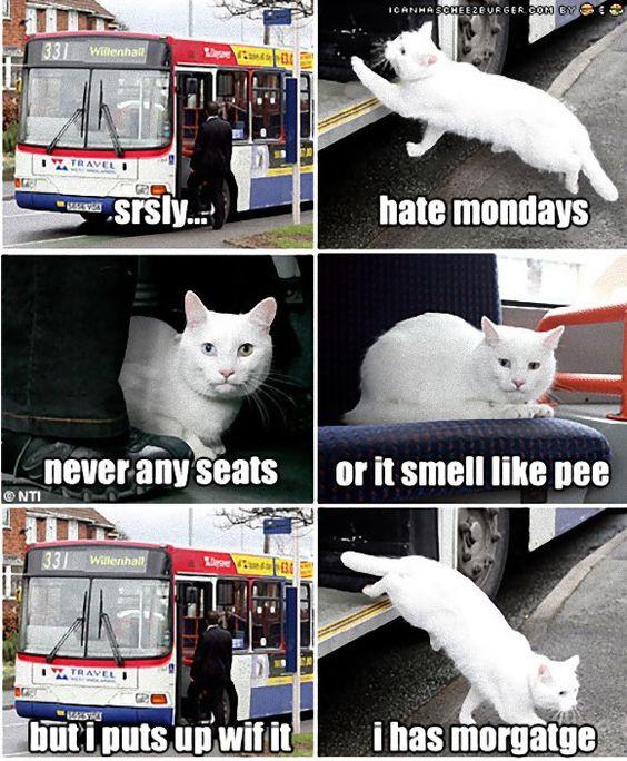 イギリスのお話なので、お魚屋さんなのかお肉屋さんなのかどうかはわからないままに、白猫のマカビティちゃんは、一人(一匹)でひょいっとバスに乗り、目的地であるとなり町の食料品店で降りて食料を調達しにいくのだという。   バスの運転手の話によると、「猫がヒョイと乗ってくるので飼い主がいると思っていたが、何度か乗ってくるようになり、飼い主がいないことがわかった。マカビティは自分の意思で乗り降りしているんです」と語る。そう、この猫はこのバスの名物乗客(乗猫)となり、マカビティという名前までつけられたのだ。