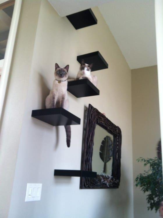 Ikea Hacks Lack Shelves For Storage Apartment Therapy Catsdiytower Katzenregale Katzen Wand Katzen Kletterwand