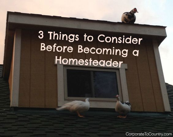3 Homesteader Questions
