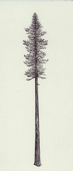 Redwood Tattoo