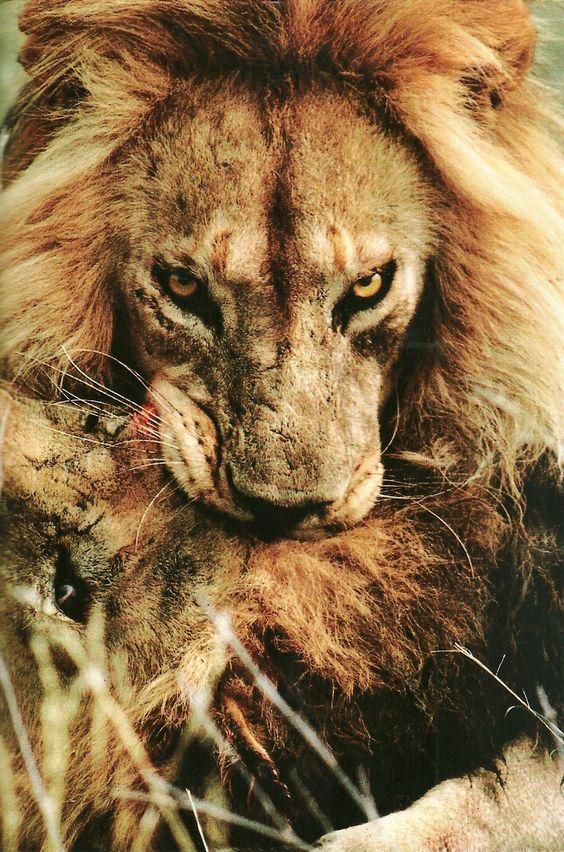 Serengeti National Park, Tanzania  National Geographic   May 1986