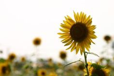 JANELA ESPÍRITA: A Flor da Espiritualidade