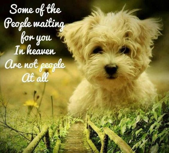 Dog Quote. Some of the people waiting for you in Heaven. Ae not people at all.