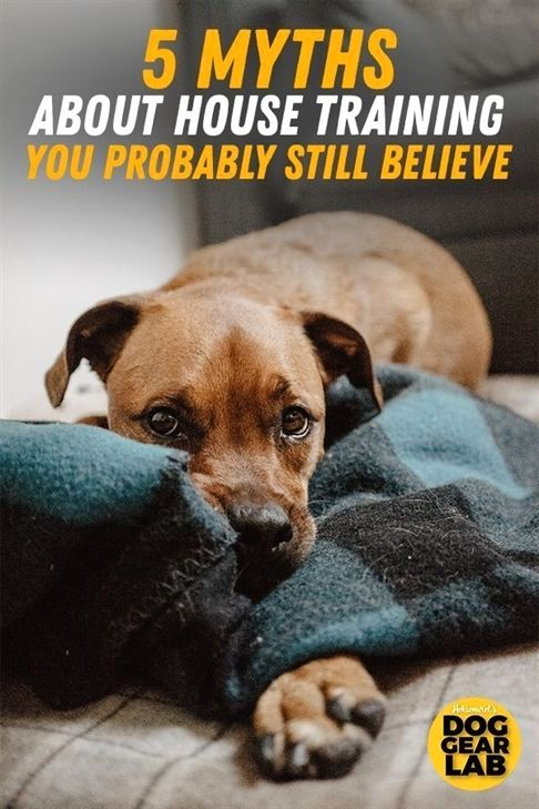 High Drive Dog Training Longmont Colorado Dog Training Treats