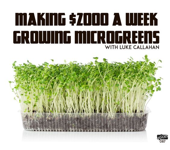 How to growing microgreens for sale google search for Best growing medium for microgreens