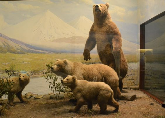 Alaskan Brown Bears at Chicago Field Museum of Natural History