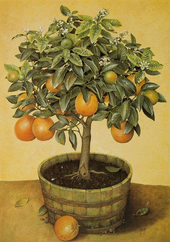 Naranjo en maceta: