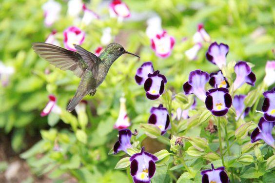 Beija-Flor 2 - null