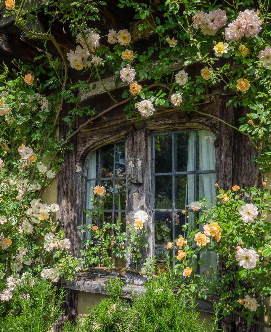 Profusion végétale en façade