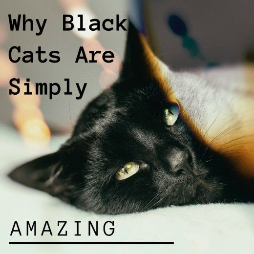 Why Adopt A Black Cat Black Cat Appreciation Day Black Cat Appreciation Day Cats Black Cat Day