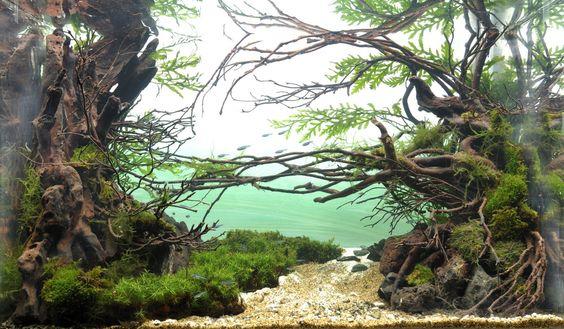 木のアーチ アクアリウムアート