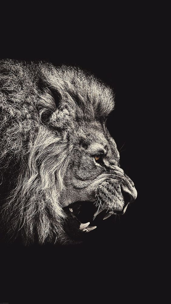 Iphone Wallpaper Black And White Lion Iphone Wallpaper Lion Wallpaper Iphone Lion Wallpaper Dark Wallpaper Iphone