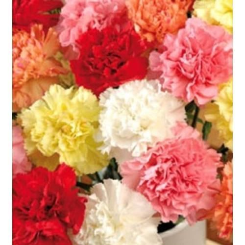 assorted fancy carnations