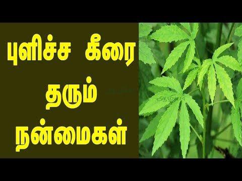 Aazhiya Pulicha Keerai Benefits In Tamil Health Health Benefits Cold Cures