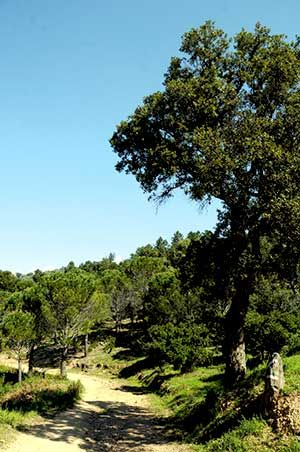 Inauguration du sentier découverte de la Forêt du Grand Duc