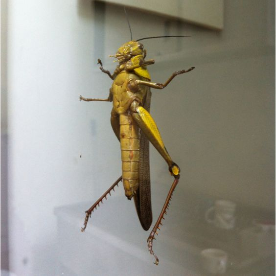 Somehow this guy got inside our soho office and decided to hang around