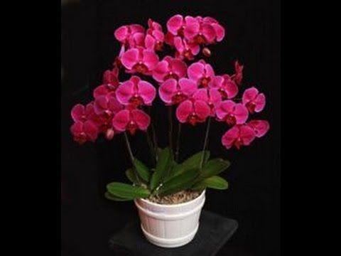 Tutorial Bunga Anggrek Akrilik By Rayina Craft Bag 1 Youtube Bunga Buatan Sendiri Bunga Daur Ulang