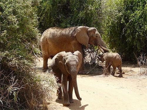 Those gorgeous elephants