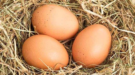 ¿Cómo saber si los huevos están frescos?
