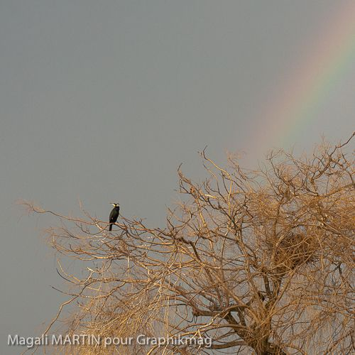 cormoran & arc-en-ciel