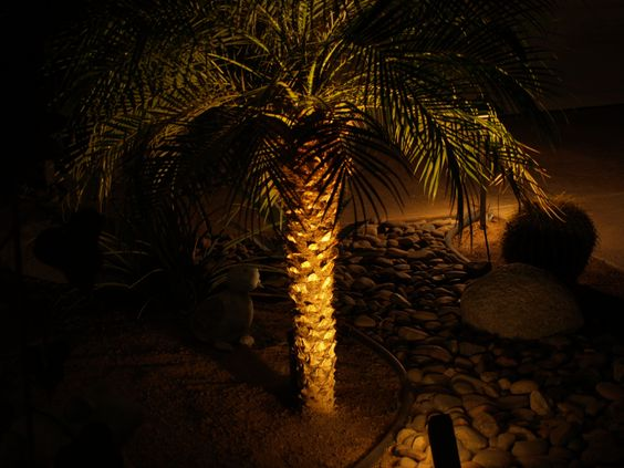 Small Palm Tree @Julie Gorges
