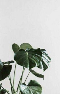 Aesthetic Tumblr Wattpad Username Ideas 2018 Completed Cute Creative Usernames Plant Wallpaper Plant Illustration Plants