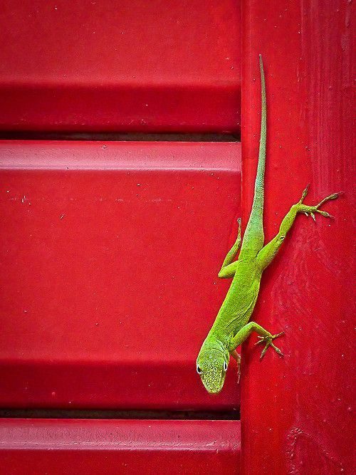 Lizards all over the patio this morning, soaking up the sun and driving the cats, who are watching through the windows, absolutely crazy...  ~~ Houston Foodlovers Book Club
