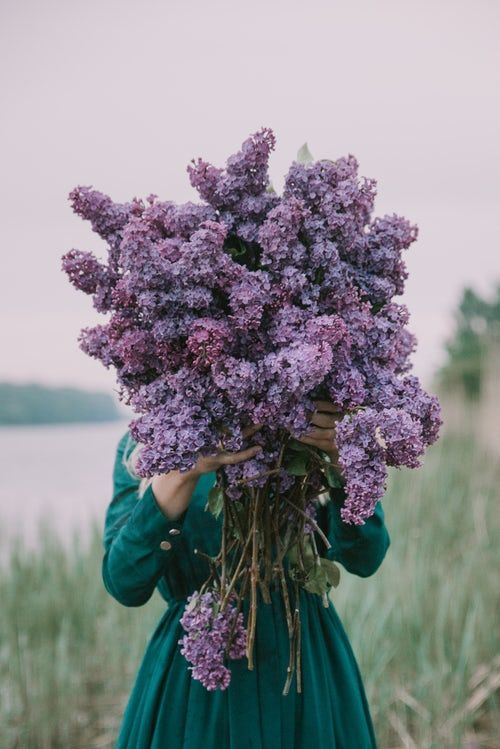 Woman Holding Flowers Flowers Photography Lilac Flowers Flower Aesthetic Best lilac flowers hd wallpapers free
