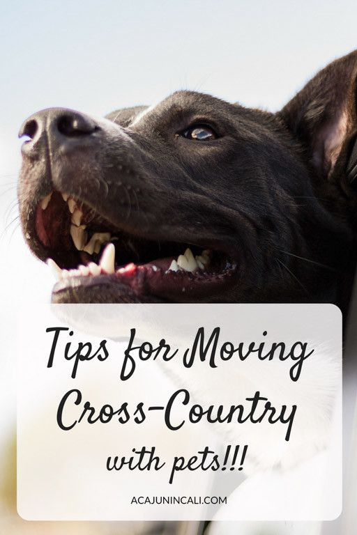 Tips For Moving Cross Country With Pets Moving Cross Country Moving Across Country Tips Moving Across Country
