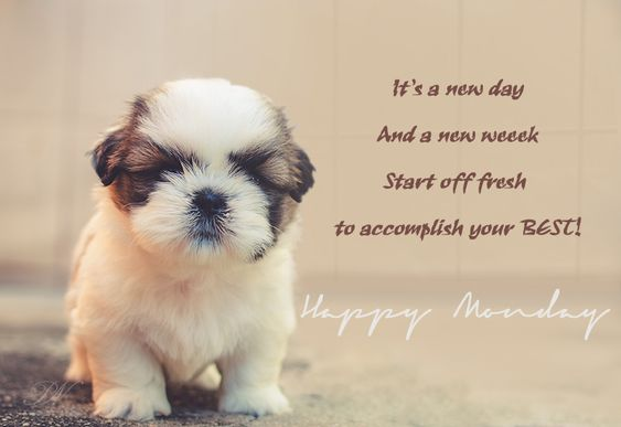 So today is Monday again. Are you looking for good morning monday images for facebook? Well at Premium Wishes, we have designed several happy monday morning images. These happy monday wishes are all available to you for free.