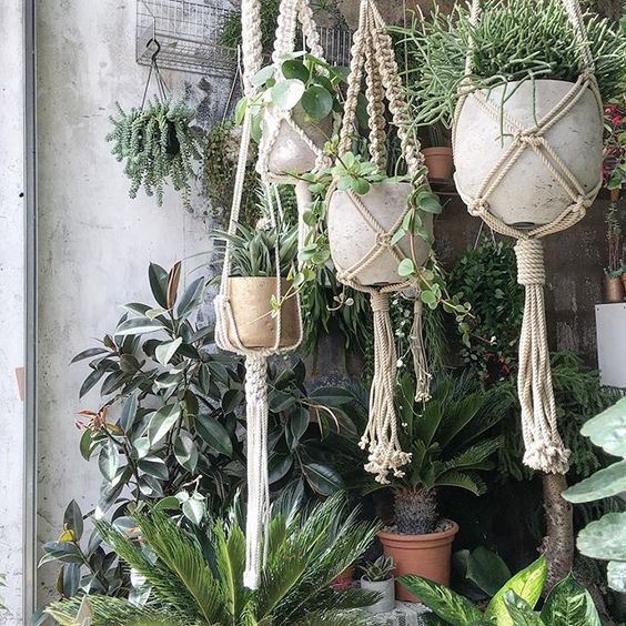 Hanging garden @conservatory_archives come and check out our new hanging plants and  @_helenrobinson_  her beautiful #macrame work every piece is different and unique! #hackney #houseplants #hangingplants #planthanger #pots #rhipsalis #peperomia #pileapeperomioides #chinesemoneyplant #pineapple #palmtrees #sagopalm #indoorplants #plantsofinstagram #interiordesign #instagram #hackney #shoreditch #urbanjunglebloggers #london #plantshopping #plantshop #happysunday